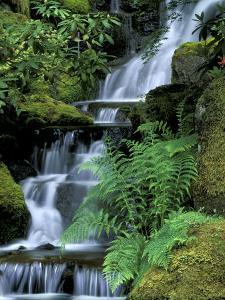 Japanese Garden, Portland, Oregon, USA by Adam Jones