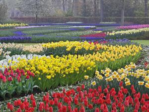 Keukenhof Gardens, Lisse, Netherlands, Holland by Adam Jones