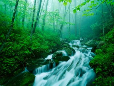 Linn Cove Creek Cascading Through Foggy Forest, Blue Ridge Parkway, North Carolina, USA