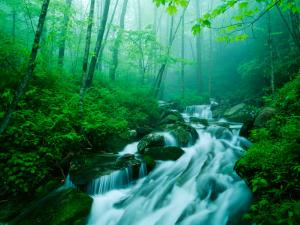 Linn Cove Creek Cascading Through Foggy Forest, Blue Ridge Parkway, North Carolina, USA by Adam Jones
