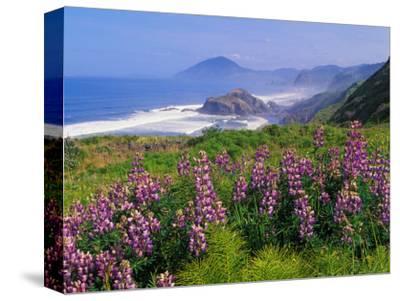 Lupine Flowers and Rugged Coastline along Southern Oregon, USA