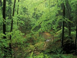 Lush Hardwood Forest, Big South Fork National River and Recreation Area, Kentucky, USA by Adam Jones