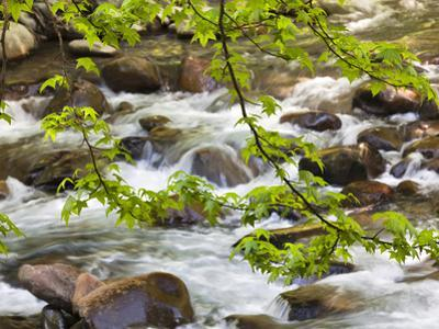 Middle Prong of the Little River, Great Smoky Mountains National Park, Tennessee, Usa