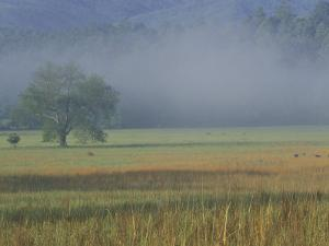 Morning Mist in Cades Cove, Great Smoky Mountains National Park, Tennessee, USA by Adam Jones