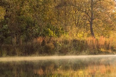 Morning View of American River Shoreline and Reflection of Fall Colors from a Kayak, California