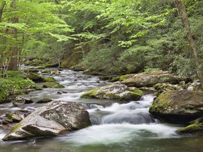 Mountain Stream, Great Smoky Mountains National Park, North Carolina, Usa