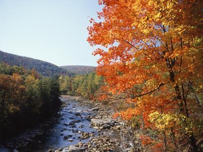 North Fork of the Potomac River, Potomac State Forest, Maryland, USA