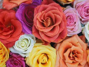Pattern in Basket of Roses, Louisville, Kentucky, USA by Adam Jones