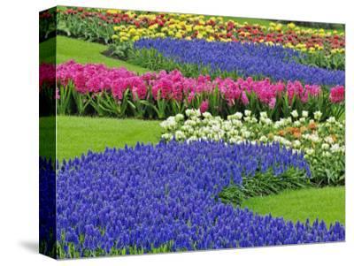 Pattern of Grape Hyacinth, Keukenhof Gardens, Lisse, Netherlands