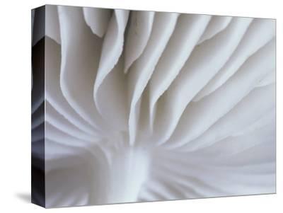 Pattern of Mushroom Gills
