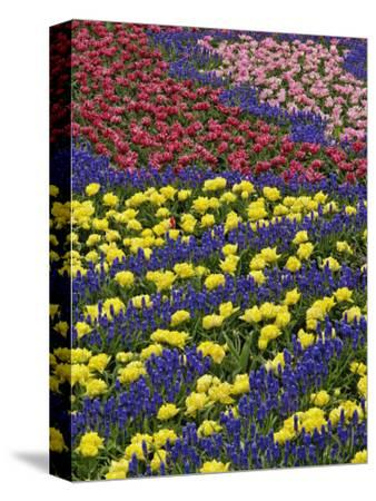 Pattern of tulips and Grape Hyacinth flowers, Keukenhof Gardens, Lisse, Netherlands