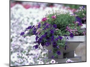 Petunias in Flower Planter by Adam Jones