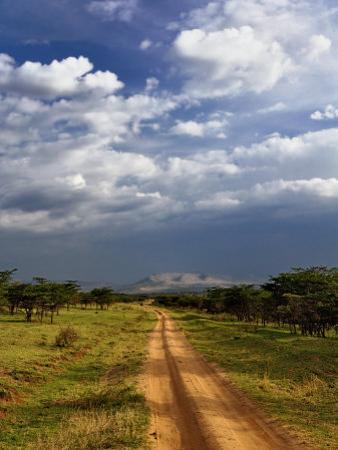 Primitive dirt road across the northern Serengeti, Serengeti National Park, Tanzania by Adam Jones