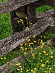 Rail Fence and Buttercups, Pioneer Homestead, Great Smoky Mountains National Park, N. Carolina, USA by Adam Jones
