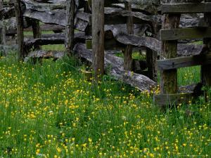 Rail Fence and Buttercups, Pioneer Homestead, Great Smoky Mountains National Park, Tennessee, USA by Adam Jones