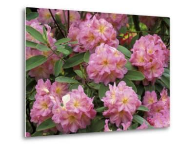 Rhododendron Garden, Portland, Oregon, USA