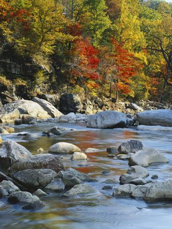 River Flowing Through Forest in Autumn, North Fork, Potomac State Forest, Maryland, USA