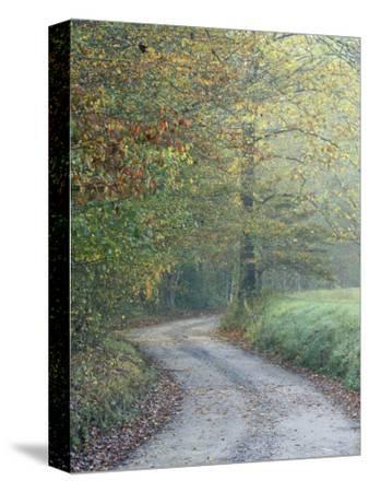 Road through Cataloochee Valley, Great Smokey Mountians National Park, North Carolina, USA