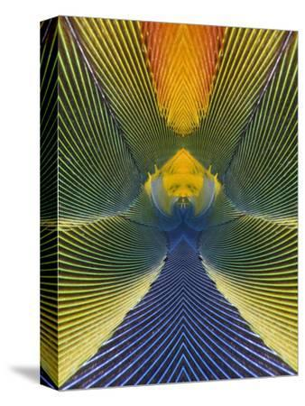 Scarlet Macaw Abstract Feather Pattern (Ara Macao)