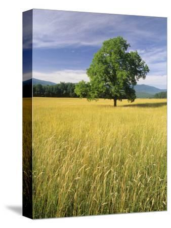 Single Tree in a Field, Cades Cove, Great Smoky Mountains National Park, Tennessee, USA