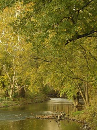 Small Creek at Sunrise, Bluegrass Region Near Lexington, Kentucky