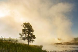 Steaming mist at sunrise along Firehole River, Yellowstone National Park, Wyoming by Adam Jones
