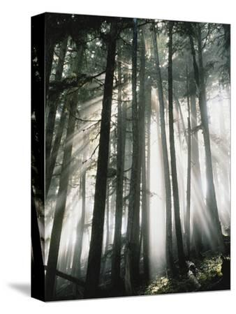 Sunbeams Streaming Through Trees, Mt. Rainier National Park, Washington, USA