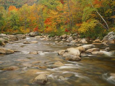 Swift River Flowing Trough Forest in Autumn, White Mountains National Forest, New Hampshire, USA
