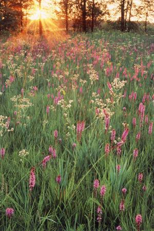 Tall Grass Prairie, Iroquois County State Wildlife Area, Illinois, USA by Adam Jones