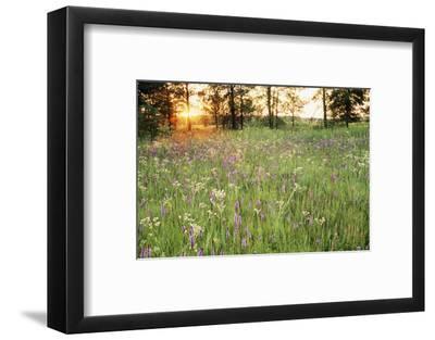 Tall Grass Prairie, Iroquois County State Wildlife Area, Illinois, USA