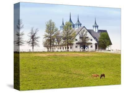 Thoroughbred Horses Grazing, Manchester Horse Farm, Lexington, Kentucky, Usa