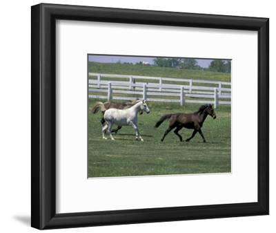 Thoroughbred Horses Running, Kentucky Horse Park, Lexington, Kentucky, USA