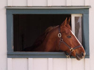 Thoroughbred Race Horse in Horse Barn, Kentucky Horse Park, Lexington, Kentucky, USA by Adam Jones