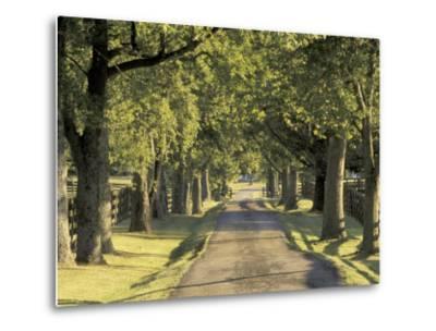 Tree-Lined Driveway, Bluegrass Region, Lexington, Kentucky, USA