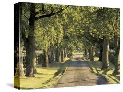Tree-Lined Driveway, Bluegrass Region, Lexington, Kentucky, USA