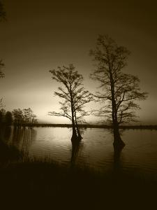 Trees Reflected in Water, Reelfoot National Wildlife Refuge, Tennessee, USA by Adam Jones