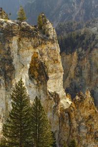 Trees within Grand Canyon of Yellowstone, Yellowstone National Park, Wyoming by Adam Jones