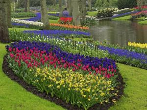 Tulips, Grape Hyacinth and Daffodils, Keukenhof Gardens, Lisse, Netherlands by Adam Jones