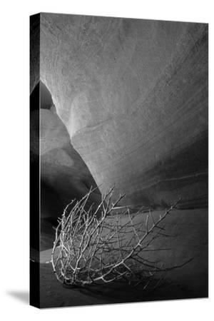 Tumbleweed on Ledge in Antelope Canyon, Page, Arizona, USA