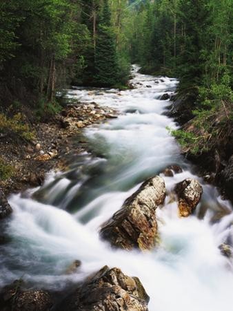 View of Crystal River Colorado, Gunnison National Forest, Colorado, USA