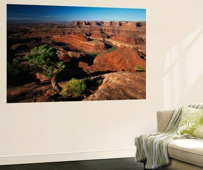 View of Gooseneck and Dead Horse Point, Dead Horse Point State Park, Utah, USA