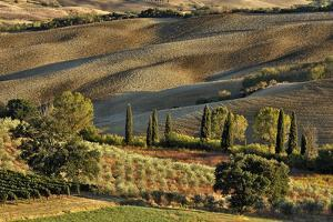 Vineyard and Olive Groves among Agricultural Field by Adam Jones