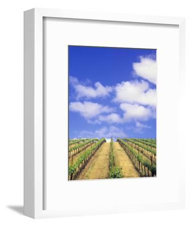 Vineyard, Sonoma Valley, California, USA