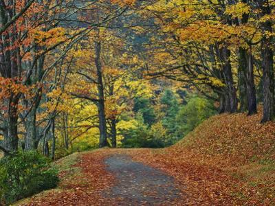 Walking Trail around Bass Lake in the Autumn, Blowing Rock, North Carolina, USA by Adam Jones