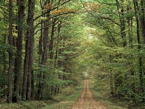 Chambord Forest, Loire, France by Adam Woolfitt