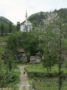 Tea Plantations and Almond Blossom in Coastal Region, Trabzon Area, Anatolia, Turkey by Adam Woolfitt
