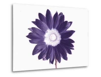 De-Saturated Flower