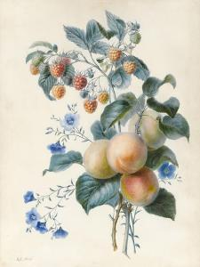 Flowers with Plums and Raspberries on their Branches (W/C and Bodycolour on Vellum) by Adele Riche