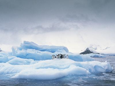 Adelie Penguin (Pygoscelis Adeliae) Group on Iceberg, Antarctic Peninsula-Gerry Ellis-Photographic Print