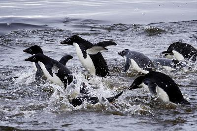 Adelie Penguins on Devil's Island in the Weddell Sea of Antarctica-Jim Richardson-Photographic Print